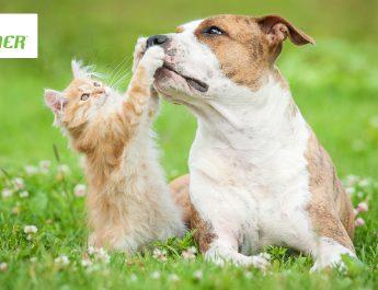 Alimenti sicuri per i nostri animali