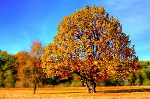 tree-99852_640-pixabay