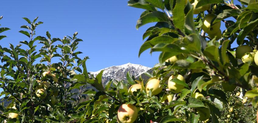 Panorama Agriturismo Monte Pin