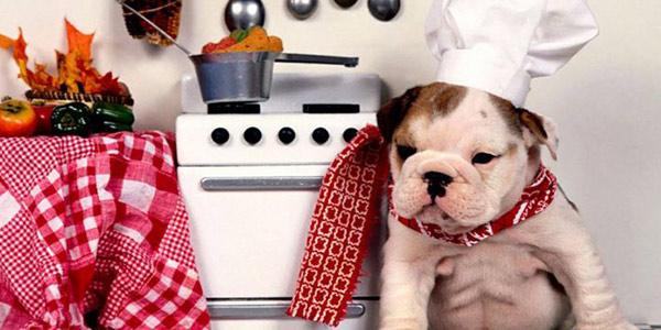Alimentazione dei cani: la dieta casalinga