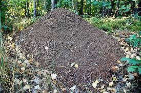 Rifiuti organici e compostaggio